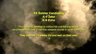 Jessi Z Folinku Pups, K9 Agility Soldiers  In Training