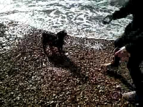 Xxx Mp4 Roxy S First Time At The Seaside Xxx 3gp Sex