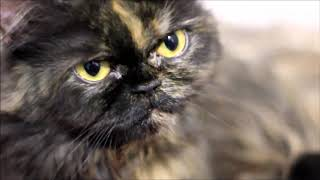 Vesna, From zero to a Mom cat with 4 meowing kittens - short version