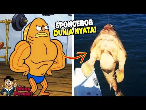 Xxx Mp4 Aslinya Beneran Kekar Inilah Karakter Film SpongeBob Di Dunia Nyata 3gp Sex