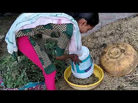 Xxx Mp4 Gujarat Village Hot Girl Buffalo Full Lentha All Work Live Video 3gp Sex
