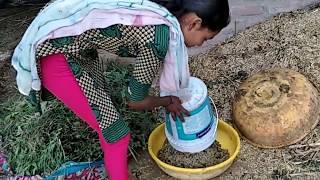 gujarat  village hot girl buffalo full lentha all work live video