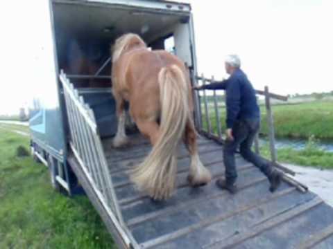 Zaaien met trekpaarden in Tripscompagnie. wie weet waar het ligt mag het zeggen