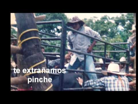 Cochi Loco de Pinotepa de Don Luis