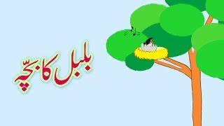 Bulbul ka Bacha (Urdu Poem)   (بلبل کا بچّہ (اردو نظم