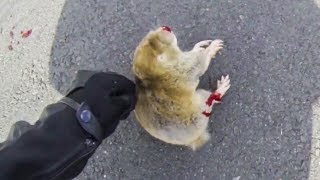 BIKER TRYING TO HELP DYING ANIMAL | BIKERS ARE NICE | RANDOM ACTS OF KIDNESS  |  [Ep. #36]