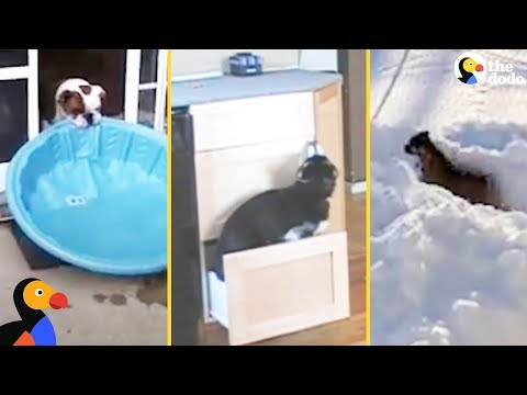 SMART Dogs Showing Off Their Problem Solving Skills The Dodo