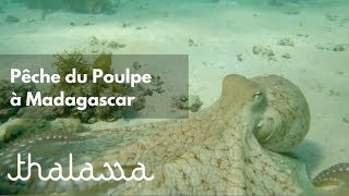 Exclu WEB - chasseur de poulpe à Madagascar - Thalassa (reportage complet)
