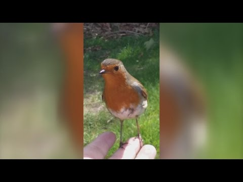Mom Brought To Tears When Wild Bird Comforts Her While Visiting Son s Grave