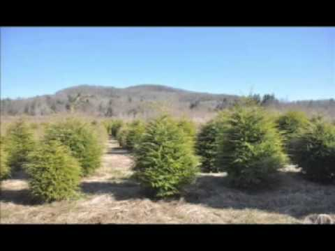 Xxx Mp4 Treefarm East Coast Usa Bucks County X X X 3gp Sex