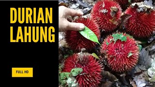 Durian Merah, Durian Lahung