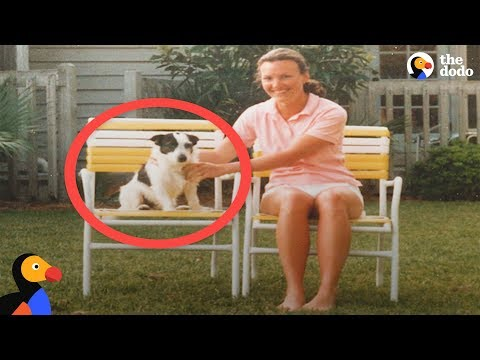 Xxx Mp4 Ghost Dog Visits Family As A Spirit The Dodo 3gp Sex