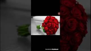 طلب زواج سوريه العمر 32 الاقامه بحلب رقم 721