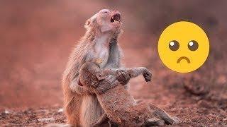 حيوانات تبكي مثل البشر ، مواقف مؤثرة للحيوانات سبحان الله