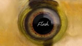 Flash Fisheye Lens
