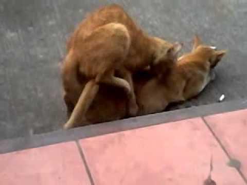 Xxx Mp4 Cat Scandal Vergen Pa 3gp Sex
