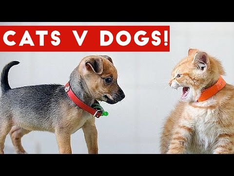 Funniest Cat Vs Dog Video Compilation December 2016 | Funny Pet Videos
