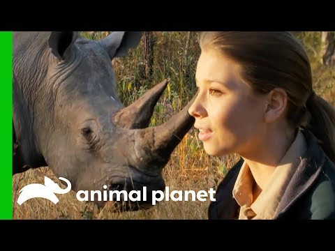 Bindi Has a Magical White Rhino Encounter in the African Bush Crikey It s The Irwins