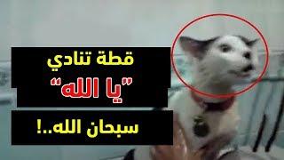 سبحان الله،7 حيوانات تتكلم مثل البشر تماماً وتذكر الله !!