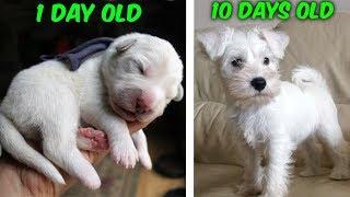 My baby puppy grew up SO FAST! (Cutest dog)