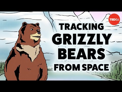 Tracking grizzly bears from space - David Laskin