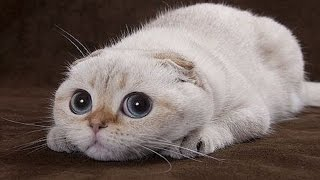 Funny Cats ► Crazy Animal Videos Compilation August 2015 ► Animals TV