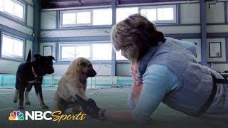 Meet the legendary South Korean dog breed, the Jindo