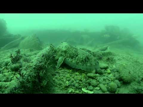 Plongée autour de l Ile d Oléron