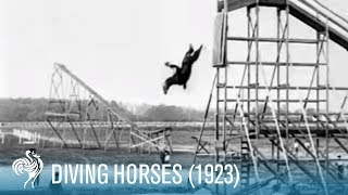 Diving Horse (from a 60ft platform)