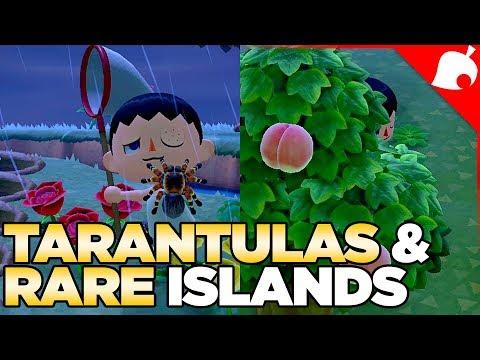 240 000 of Tarantulas & A Rare Fruit Island in 1 Night Animal Crossing New Horizons