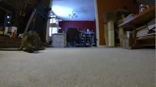 slow motion cat laser chase