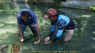 Morea Sidat Raksasa Penghuni Rimba Maluku - Jejak Rimba (4/6)
