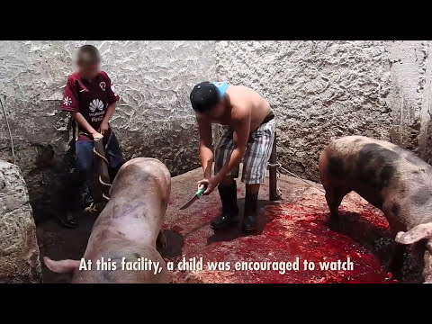 The Mexican Government Owns Slaughterhouses And They re Way Worse Than You Think