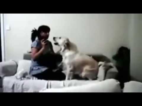 Σκυλιά προστατεύου� παιδί από ξυλοδαρμό