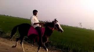 Kaleem enbhura horse