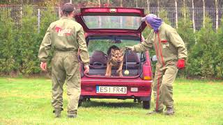Ado German Shepherd Detection Inside And Outside