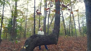 If You Find A Bent Tree In The Forest, You May Have Just Stumbled Upon A Centuries Old Secret