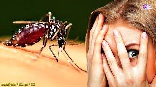 لماذا يلسع البعوض بعض الناس أكثر من غيرهم | لماذا أنا دائماً  ؟؟