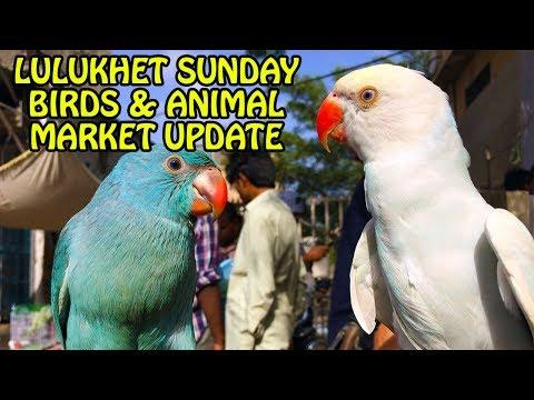 Xxx Mp4 Lalukhet Sunday Birds And Animals Market Update Video In Urdu Hindi 3gp Sex