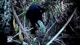 Reza Pishro - Divooneh OFFICIAL VIDEO HD