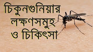 Chikungunya Virus Attack, Symptoms, Treatment - Health Tips In Bangla