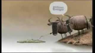 انیمیشن تمساح با دوبله محلی