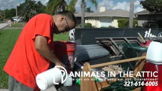 Remove, Exterminate & Decontaminate Rats in Melbourne FL Indian Harbour Beach 321-614-6005