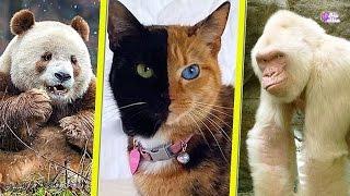 حيوانات بألوان غريبة لن تصدق أنها موجودة بالفعل ! | غوريلا بيضاء وحصان ذهبى !