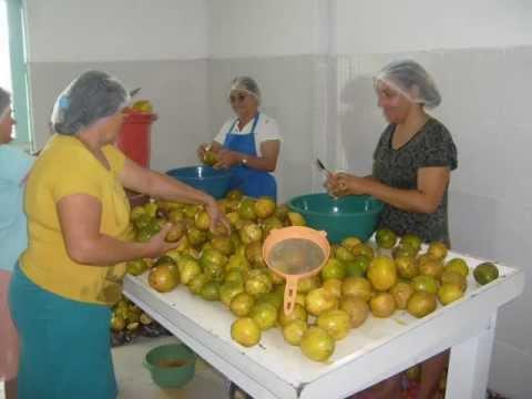 fabrica de polpas de frutas em são sebastião BA