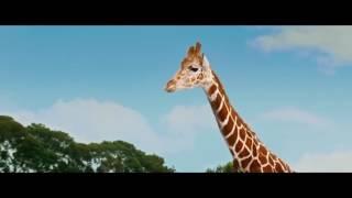 Que paso ayer 3 - Escena de la jirafa