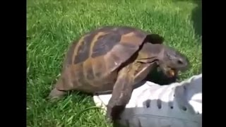 Turtle Remix Compilation