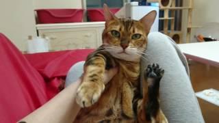 もはや定番化しつつある、私とベンガル猫マオちゃんとの会話