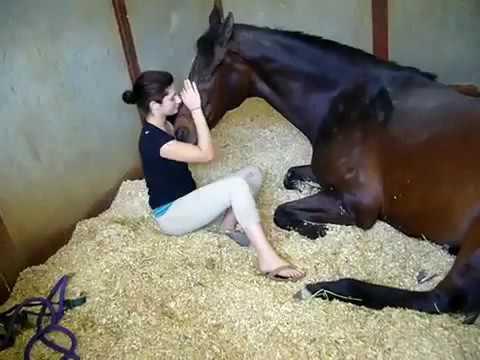 Xxx Mp4 بنت مع حصان 3gp Sex
