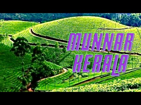 Munnar Beautiful Tea Gardens Kerala India *HD* മുന്നാർ